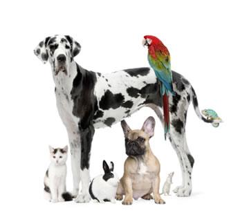 demis-animal-rescue