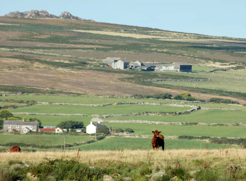 west-cornwall-farming