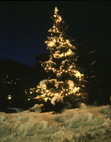 snow_covered_tree